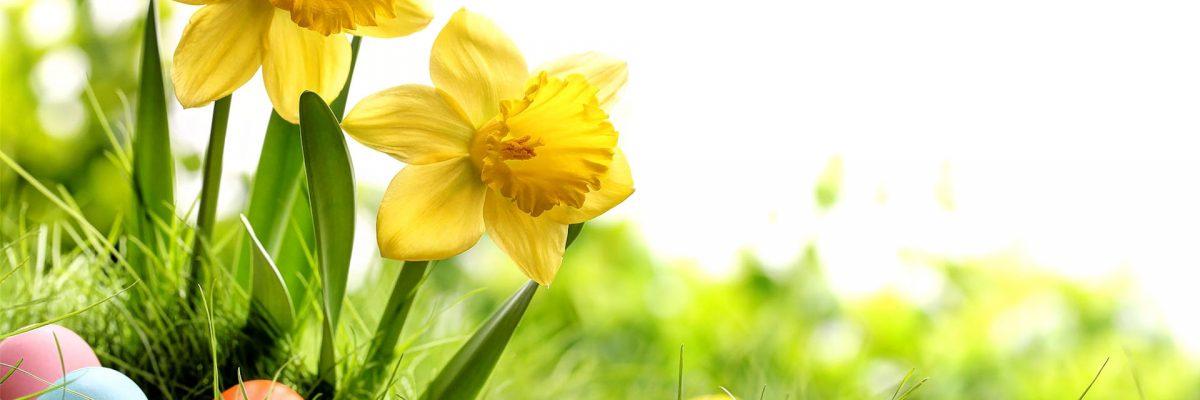 Tavaszi akciós csomagok